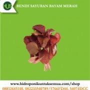 benih bayam merah
