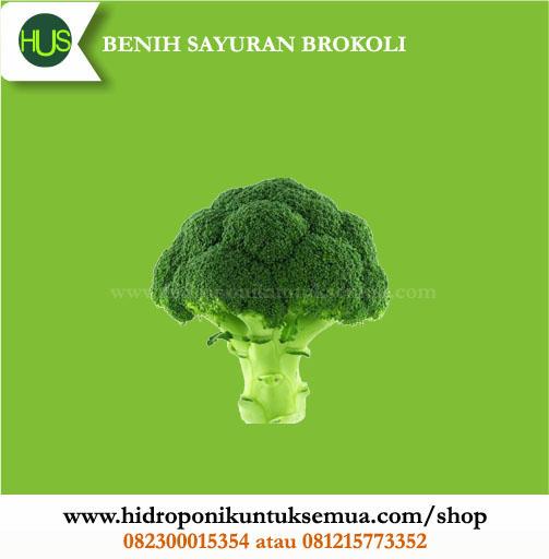 benih brokoli