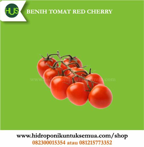 benih tomat cherry