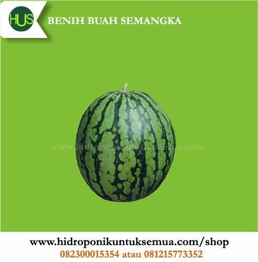 benih semangka