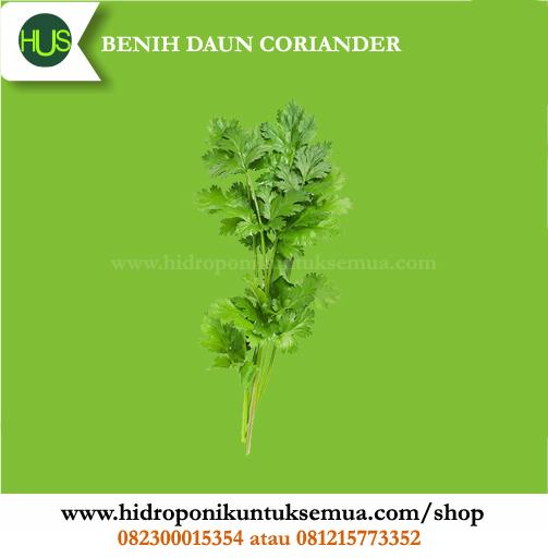 Benih Sayuran daun corriander