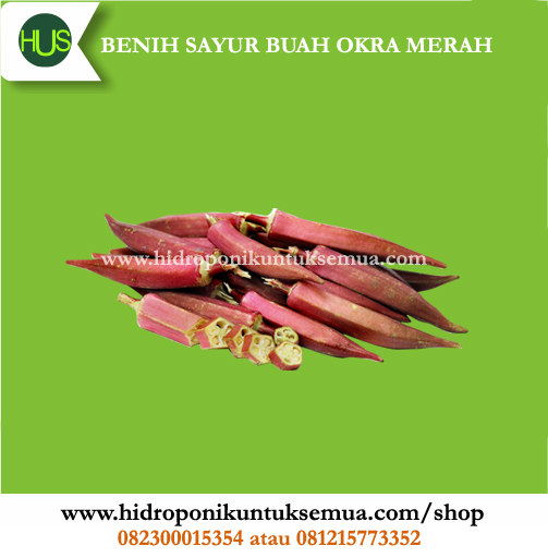 jual benih okra merah
