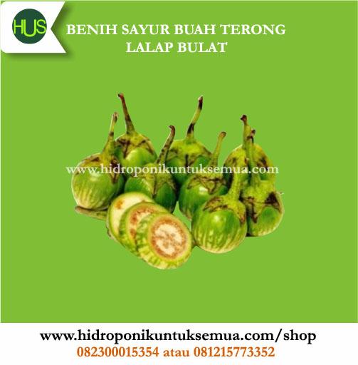 benih terong lalap buah