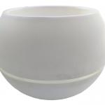 Menanam Lolorosa dengan Pot Self Watering