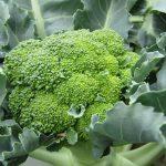 Cara Menanam Brokoli Dengan Pot Self Watering