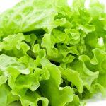 Cara Menanam Lettuce Di Planter Bag Gantung