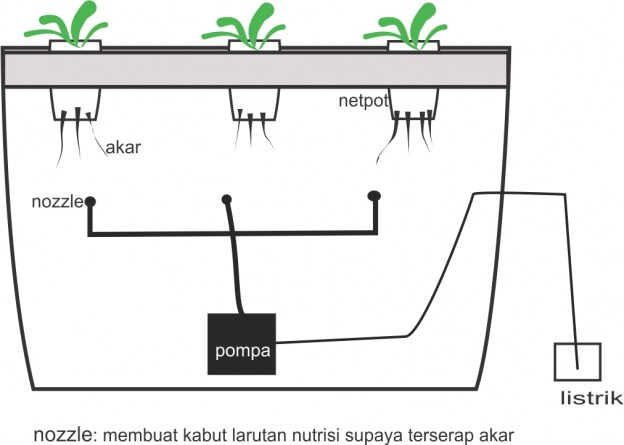 sistem NFT dan aeroponic