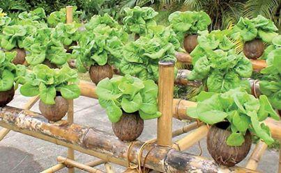 Kenapa harus belajar cara menanam hidroponik