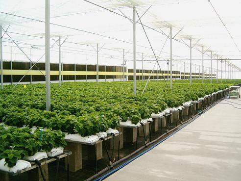 Apa sih Keunggulan menanam secara hidroponik?