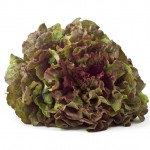Bisnis / usaha sayuran hidroponik