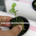 Peralatan Dasar Untuk Memulai Menanam Sayuran Hidroponik