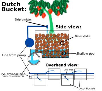 Cara menanam cabai bolivian rainbow di sistem dutch bucket