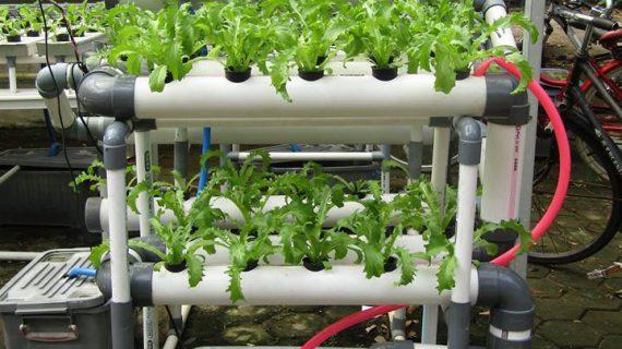 Bisnis Sayuran Hidroponik Dengan Sistem Nft