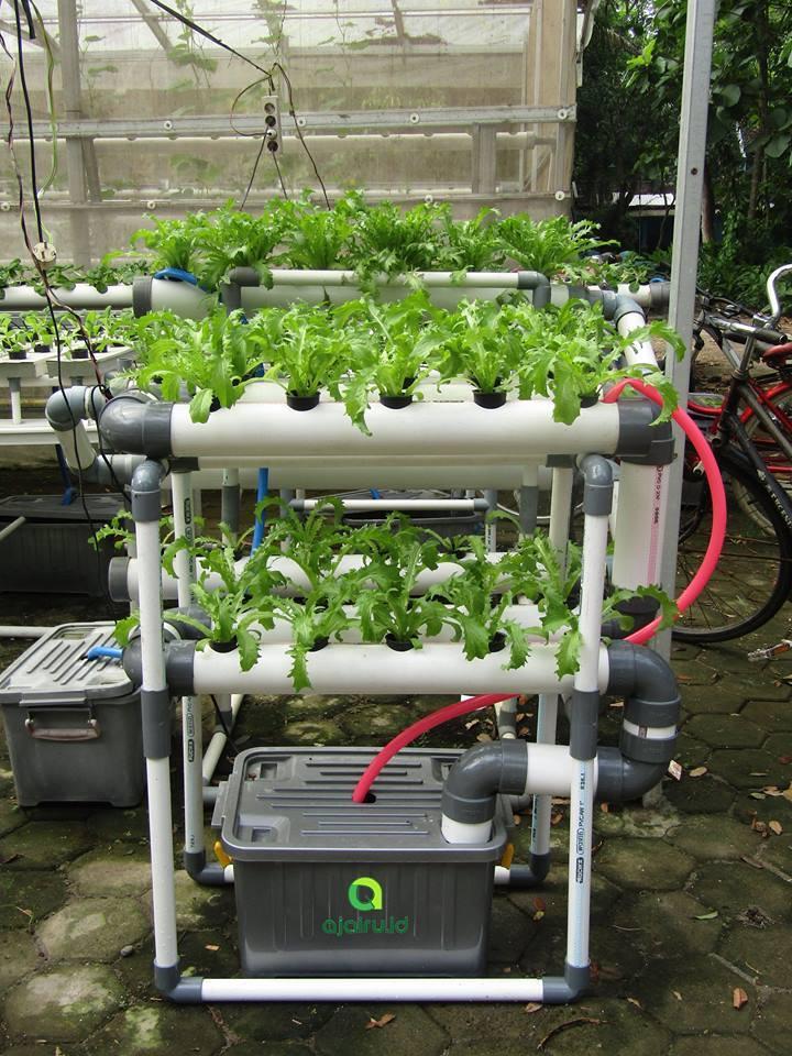 Bisnis Sayuran Hidroponik Dengan Sistem Nft Hidroponik