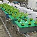 Catatan Magangers Hari ke-4 : belajar menanam sistem wick hidroponik