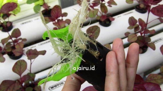 Alat Dan Bahan Untuk Bertanam Hidroponik