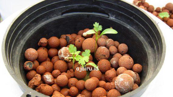 Cara Menanam Sayuran Coriander Menggunakan Powergen