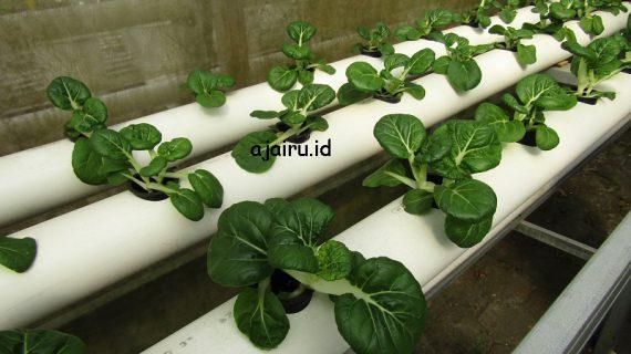 Alat-Alat Yang Di Perlukan Untuk Membuat Hidroponik