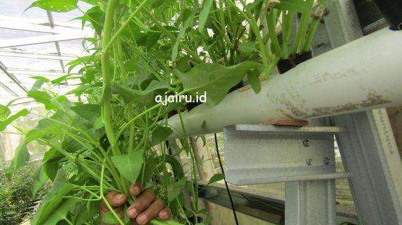 Persiapan Perlengkapan Bertani Hidroponik