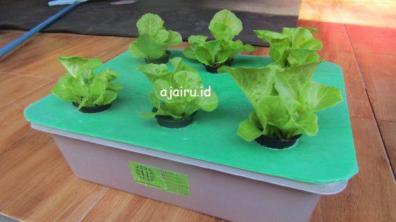 Cara Menanam Sayuran Di Sistem Wick Hidroponik